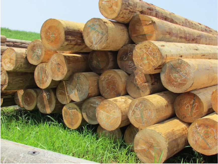 徳島へ国産杉材を直接買付け。コストダウンを実現しています。
