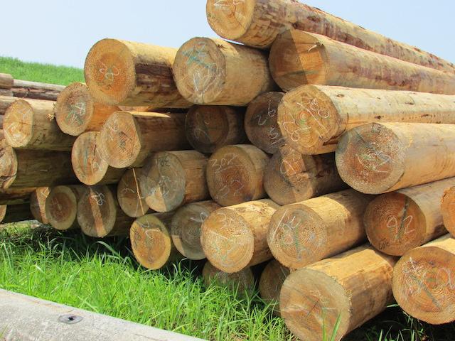 伐採された杉材