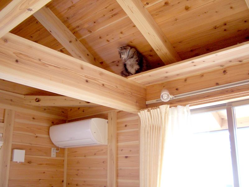 富田林寺池台 I様邸 リビングに猫ちゃん用のキャットウォークを。