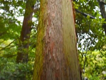 木材の長所と短所