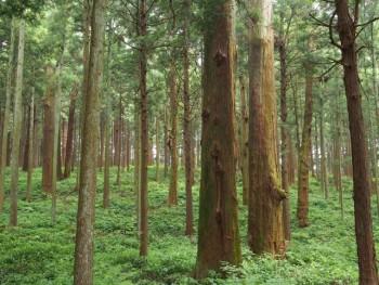 木の強度と性質